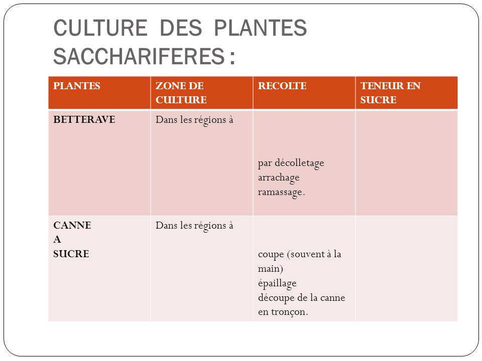 CULTURE DES PLANTES SACCHARIFERES :