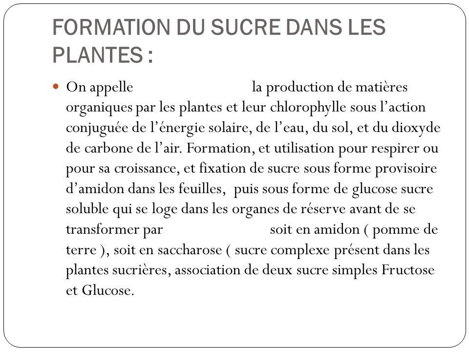 FORMATION DU SUCRE DANS LES PLANTES :