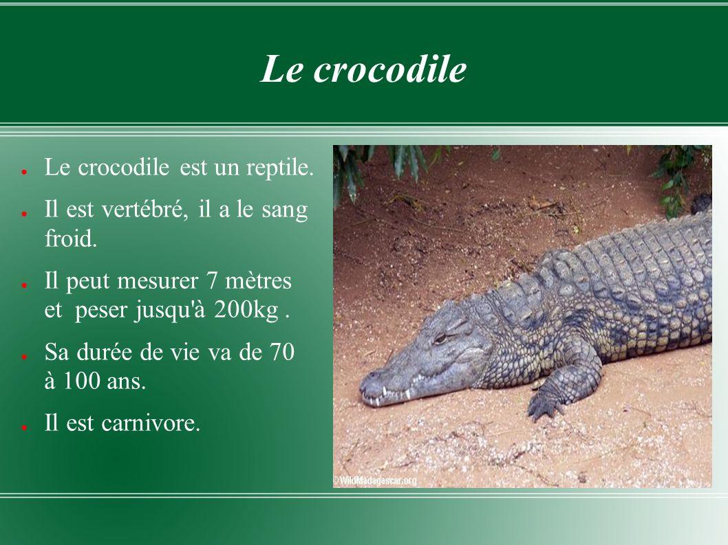 Le crocodile Le crocodile est un reptile.