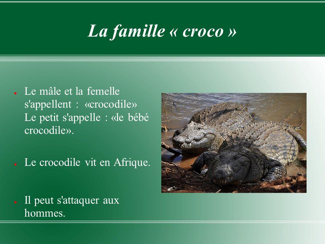 La famille « croco » Le mâle et la femelle s appellent : «crocodile» Le petit s appelle : «le bébé crocodile».