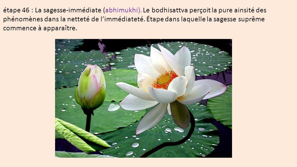 étape 46 : La sagesse-immédiate (abhimukhi)