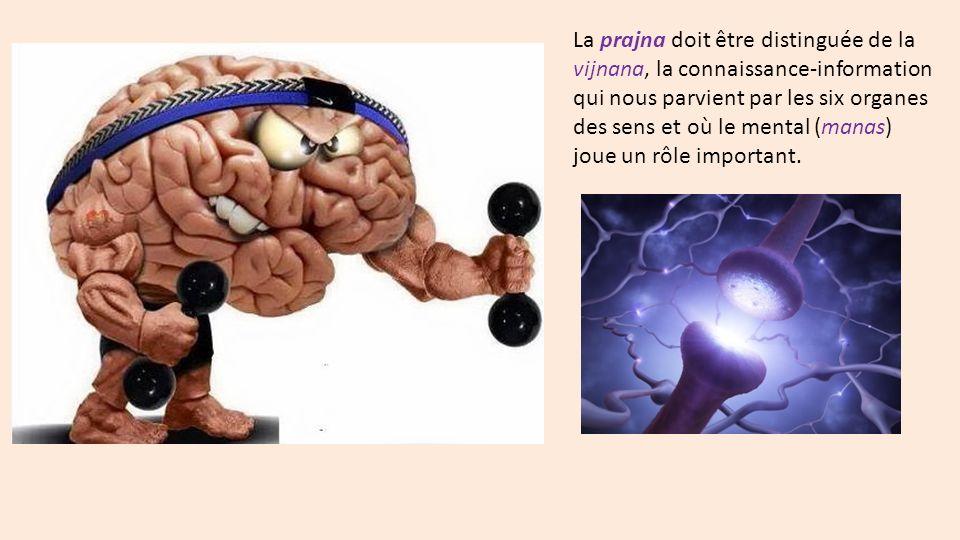 La prajna doit être distinguée de la vijnana, la connaissance-information qui nous parvient par les six organes des sens et où le mental (manas) joue un rôle important.