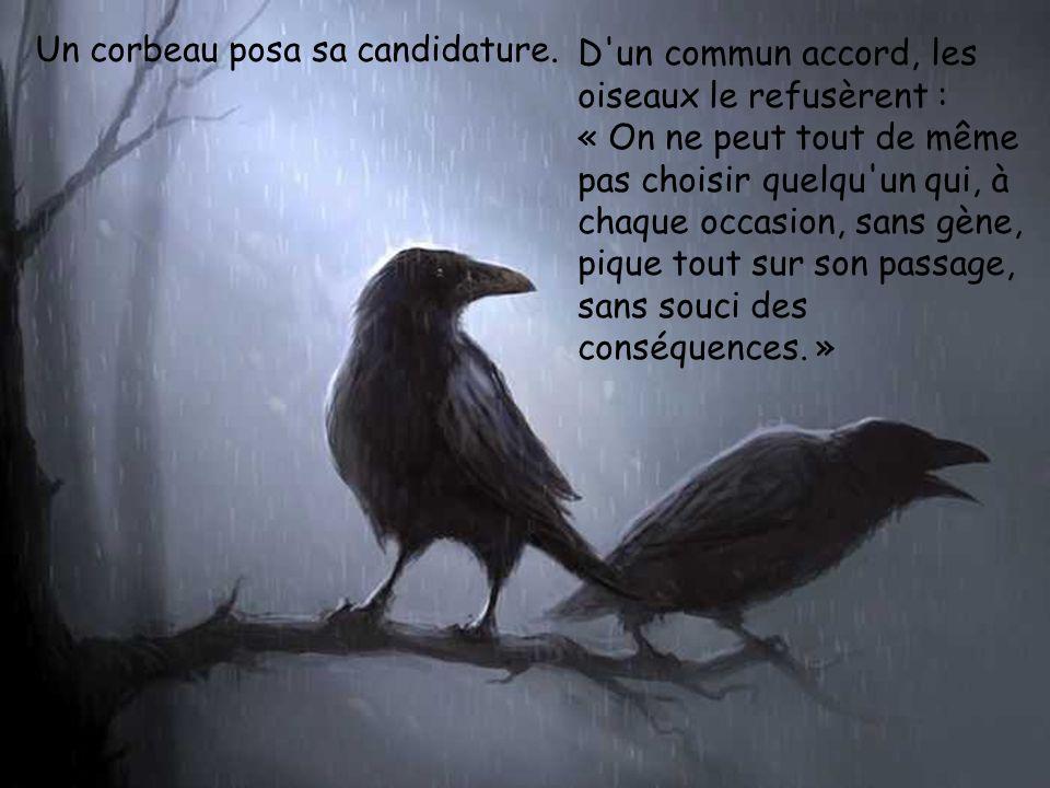 Un corbeau posa sa candidature.