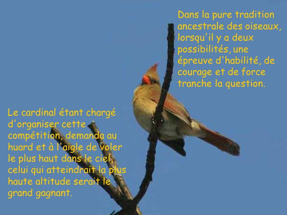 Dans la pure tradition ancestrale des oiseaux, lorsqu il y a deux possibilités, une épreuve d habilité, de courage et de force tranche la question.