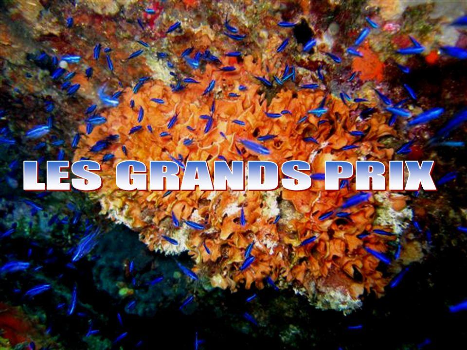 LES GRANDS PRIX