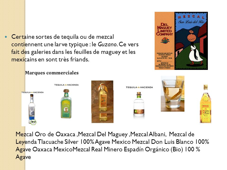 Certaine sortes de tequila ou de mezcal contiennent une larve typique : le Guzano. Ce vers fait des galeries dans les feuilles de maguey et les mexicains en sont très friands.