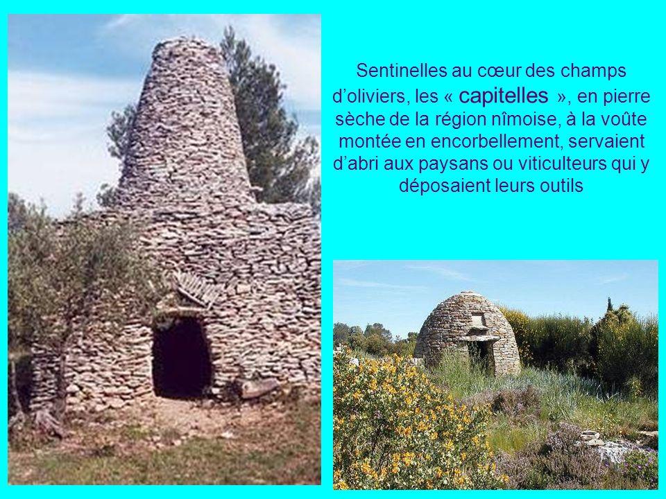 Sentinelles au cœur des champs d'oliviers, les « capitelles », en pierre sèche de la région nîmoise, à la voûte montée en encorbellement, servaient d'abri aux paysans ou viticulteurs qui y déposaient leurs outils