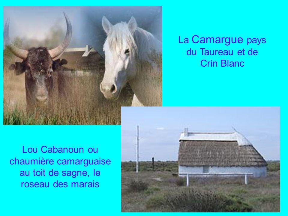 La Camargue pays du Taureau et de Crin Blanc