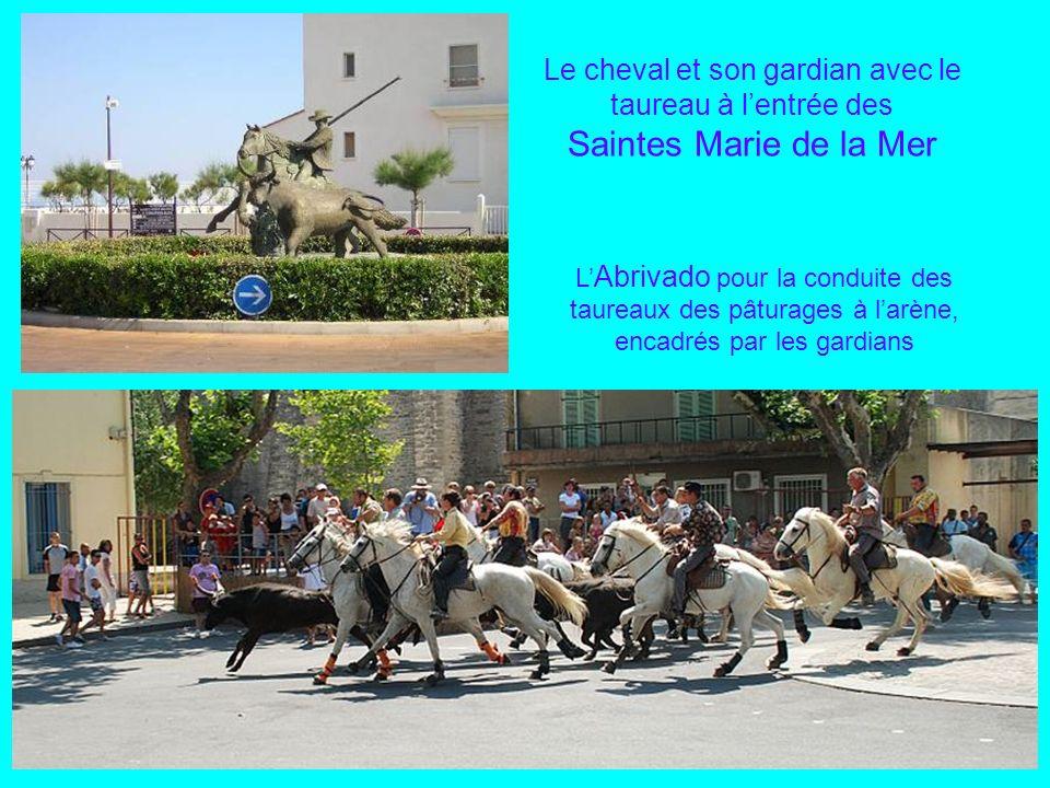 Le cheval et son gardian avec le taureau à l'entrée des Saintes Marie de la Mer