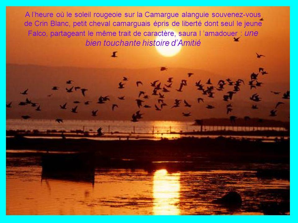 A l'heure où le soleil rougeoie sur la Camargue alanguie souvenez-vous de Crin Blanc, petit cheval camarguais épris de liberté dont seul le jeune Falco, partageant le même trait de caractère, saura l 'amadouer : une bien touchante histoire d'Amitié