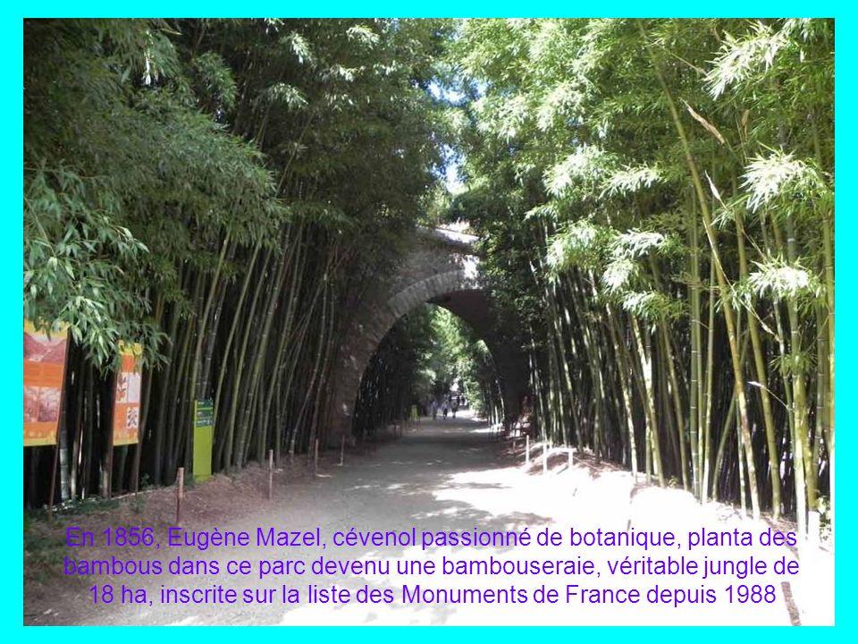 En 1856, Eugène Mazel, cévenol passionné de botanique, planta des bambous dans ce parc devenu une bambouseraie, véritable jungle de 18 ha, inscrite sur la liste des Monuments de France depuis 1988
