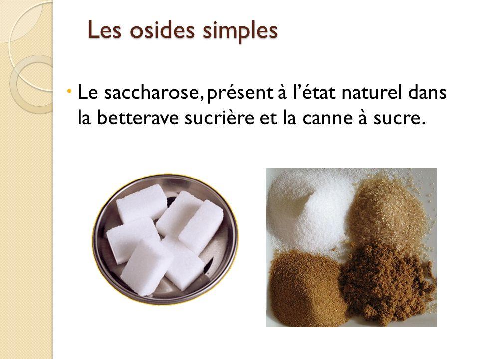 Les osides simples Le saccharose, présent à l'état naturel dans la betterave sucrière et la canne à sucre.