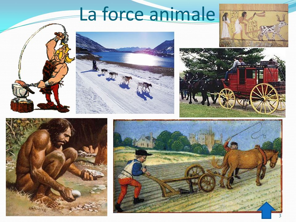 La force animale