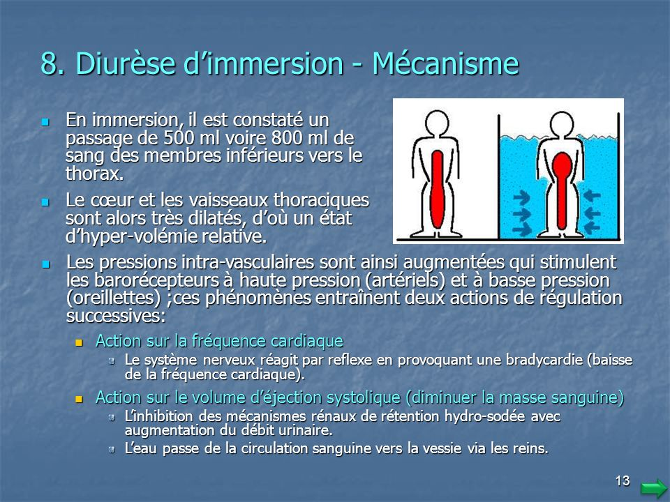 8. Diurèse d'immersion - Mécanisme