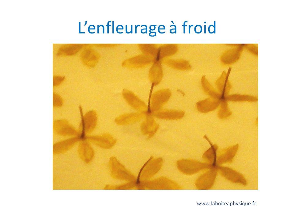 L'enfleurage à froid www.laboiteaphysique.fr