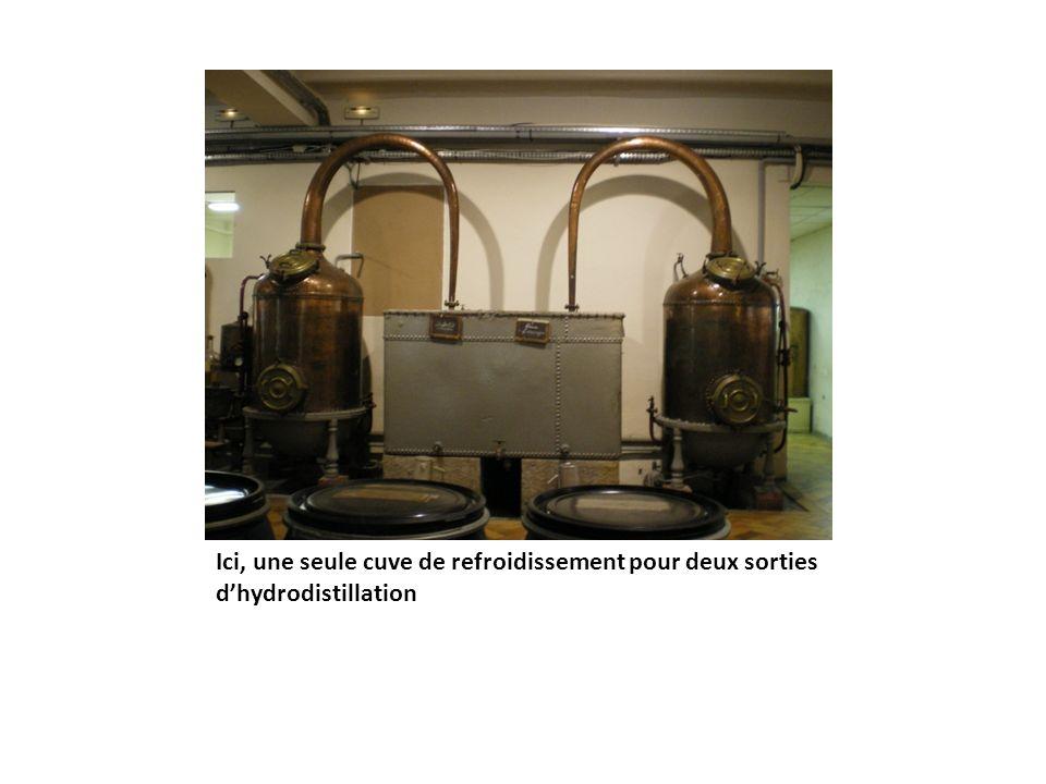 Ici, une seule cuve de refroidissement pour deux sorties d'hydrodistillation