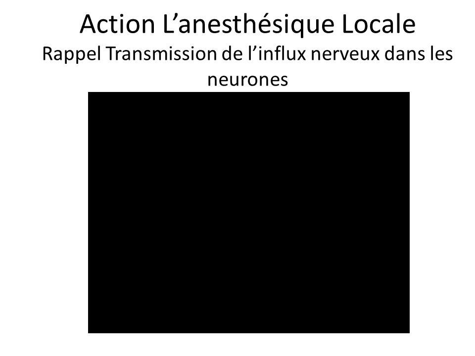 Action L'anesthésique Locale Rappel Transmission de l'influx nerveux dans les neurones