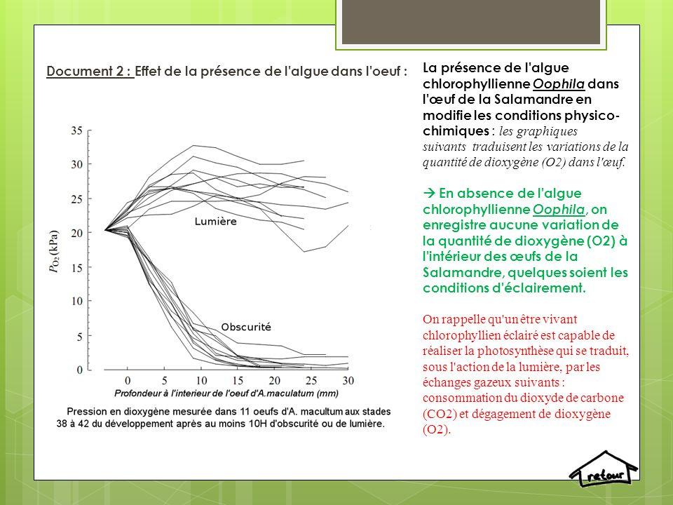 Document 2 : Effet de la présence de l algue dans l oeuf :