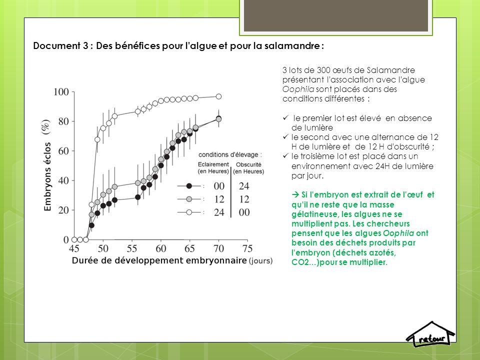Document 3 : Des bénéfices pour l algue et pour la salamandre :