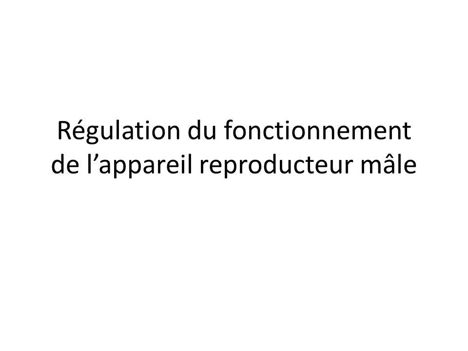 Régulation du fonctionnement de l'appareil reproducteur mâle