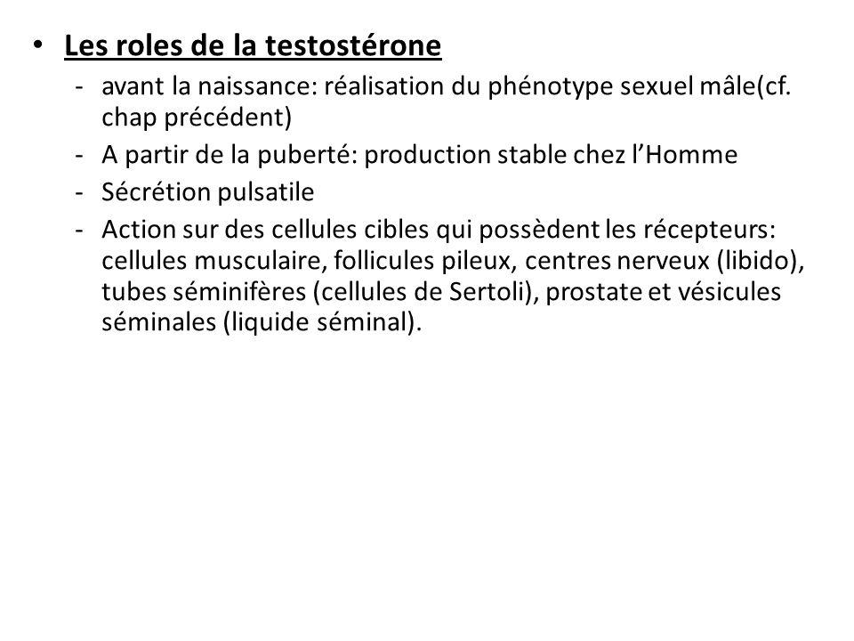 Les roles de la testostérone