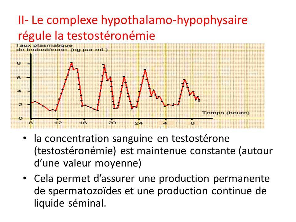 II- Le complexe hypothalamo-hypophysaire régule la testostéronémie