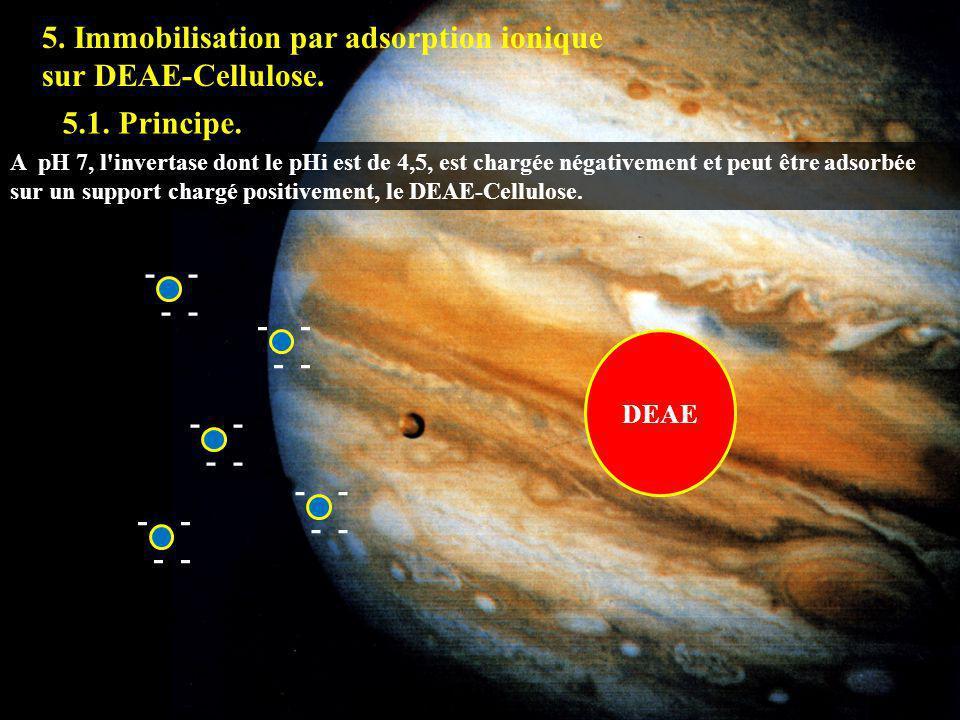 5.1 5. Immobilisation par adsorption ionique sur DEAE-Cellulose.