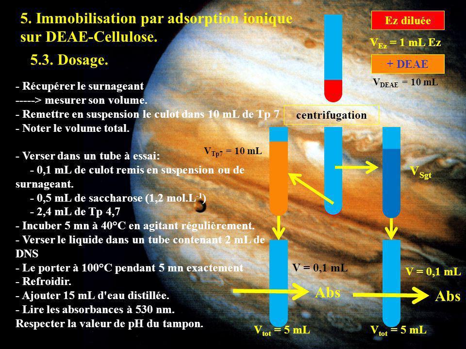 5.3 5. Immobilisation par adsorption ionique sur DEAE-Cellulose.