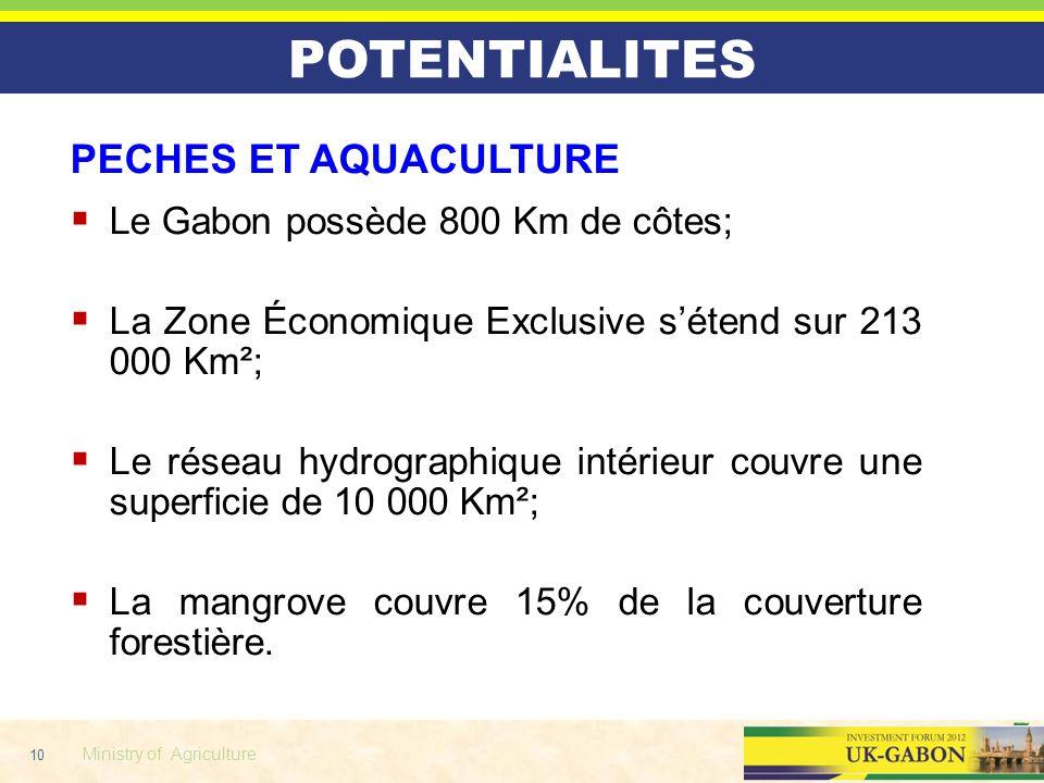 POTENTIALITES PECHES ET AQUACULTURE Le Gabon possède 800 Km de côtes;