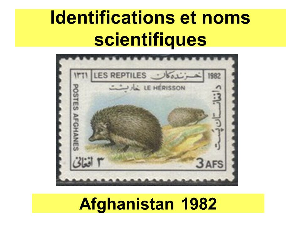 Identifications et noms scientifiques