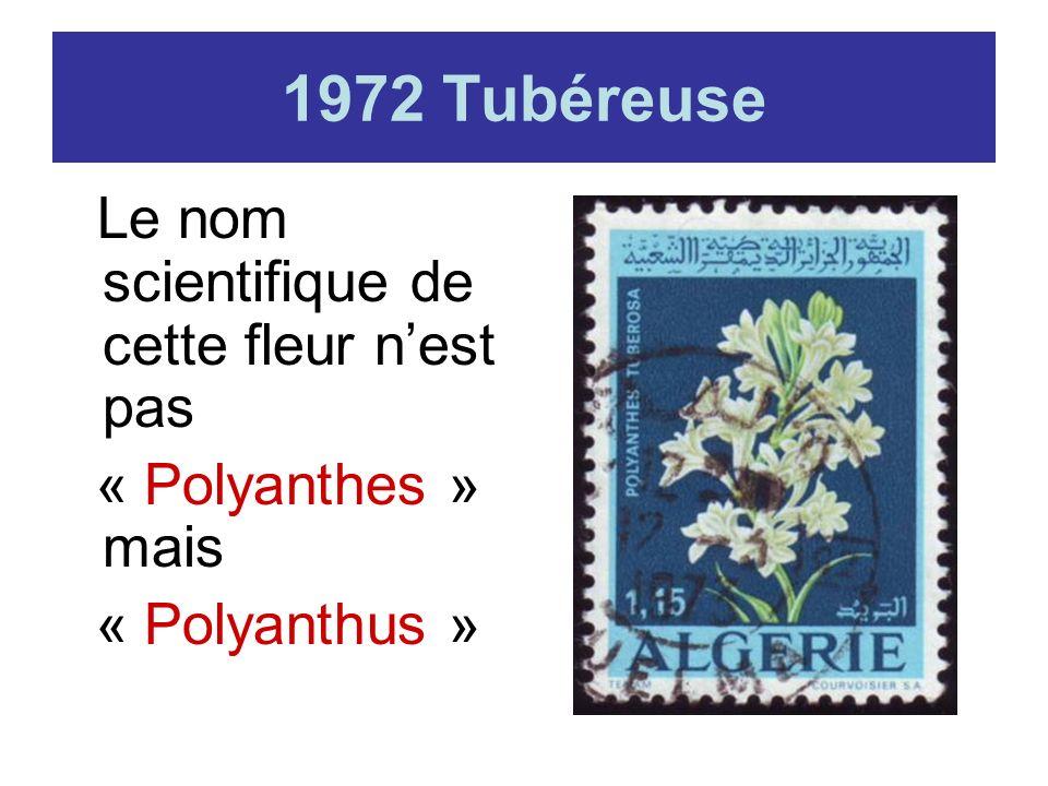 1972 Tubéreuse « Polyanthes » mais « Polyanthus »