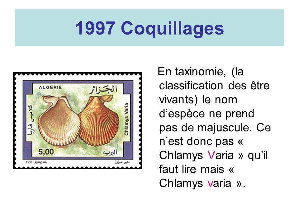 1997 Coquillages