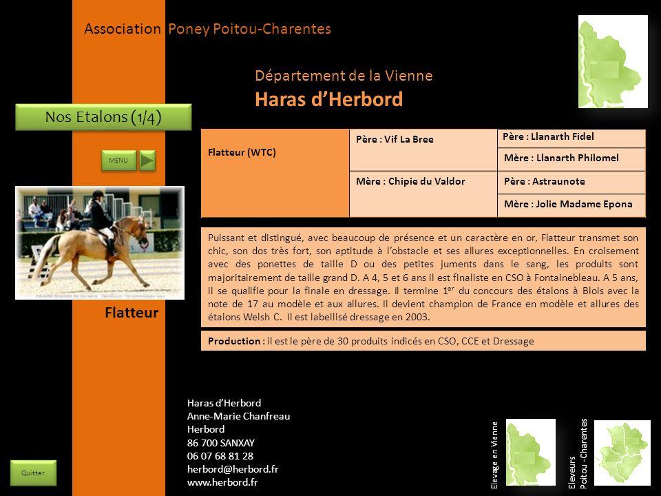 Haras d'Herbord Département de la Vienne Nos Etalons (1/4) Flatteur