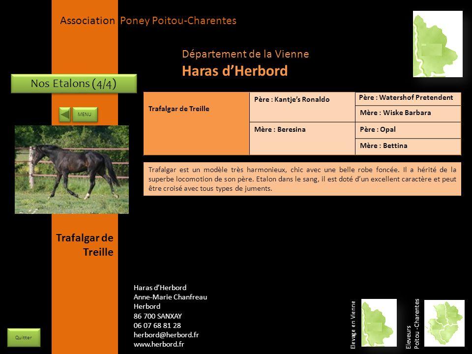 Haras d'Herbord Département de la Vienne Nos Etalons (4/4)