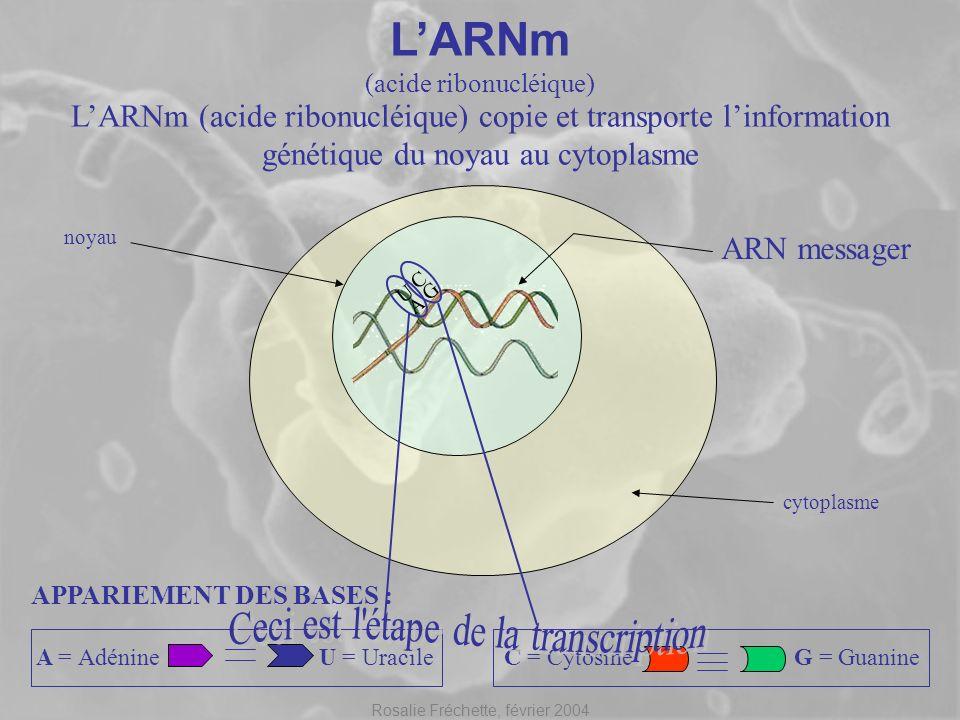 L'ARNm Ceci est l étape de la transcription