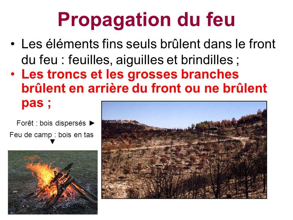 Propagation du feu Les éléments fins seuls brûlent dans le front du feu : feuilles, aiguilles et brindilles ;
