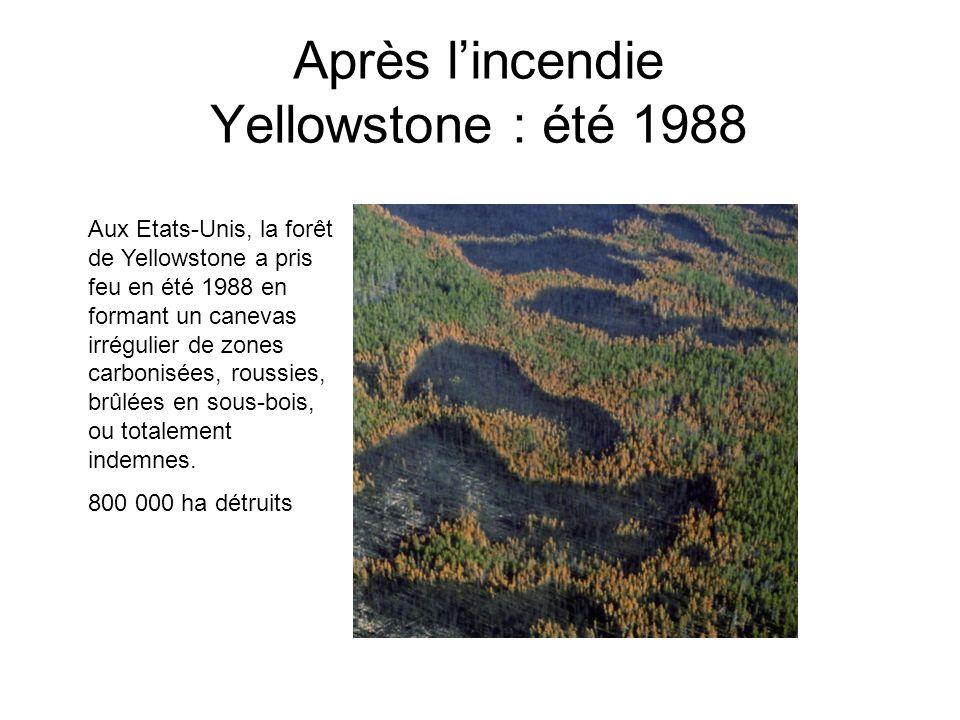 Après l'incendie Yellowstone : été 1988