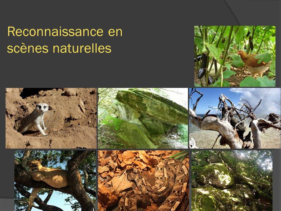 Reconnaissance en scènes naturelles