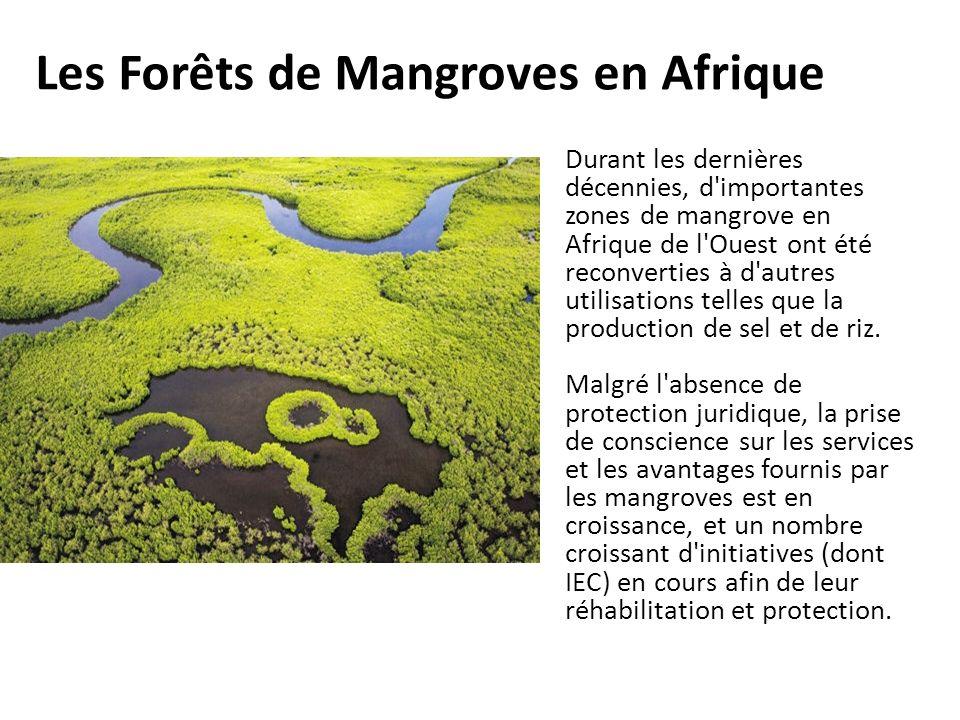 Les Forêts de Mangroves en Afrique