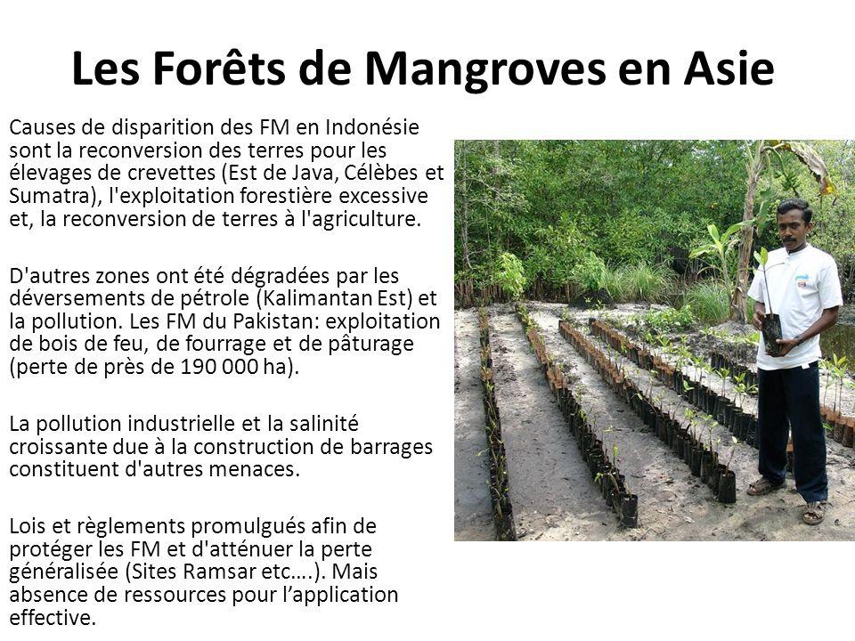 Les Forêts de Mangroves en Asie