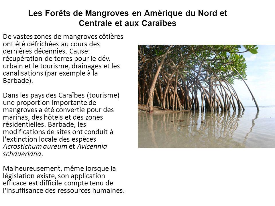 Les Forêts de Mangroves en Amérique du Nord et Centrale et aux Caraïbes