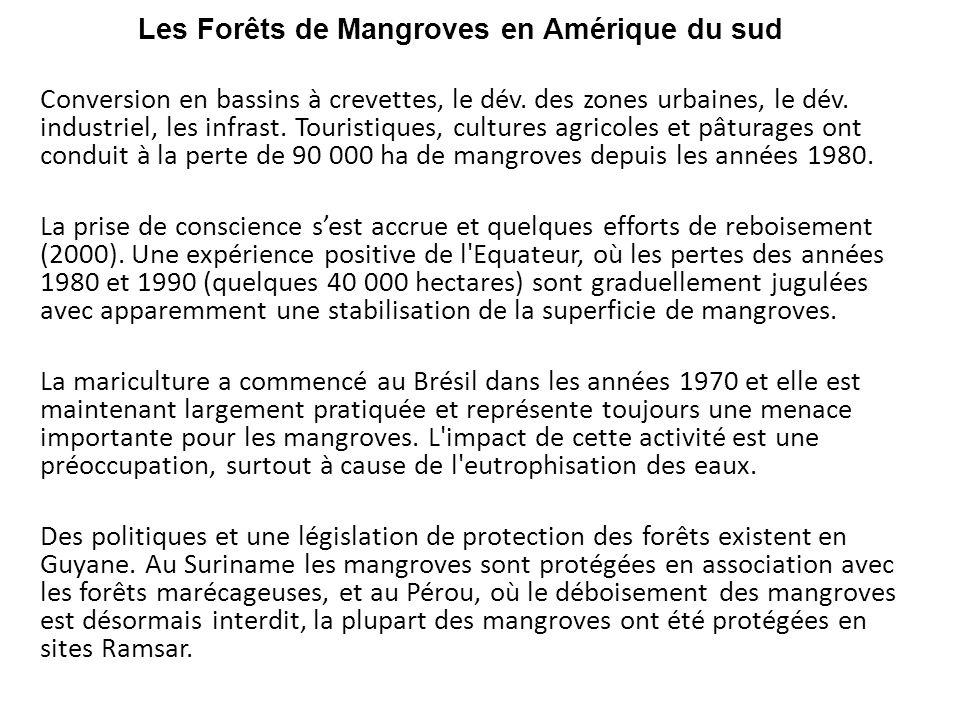 Les Forêts de Mangroves en Amérique du sud