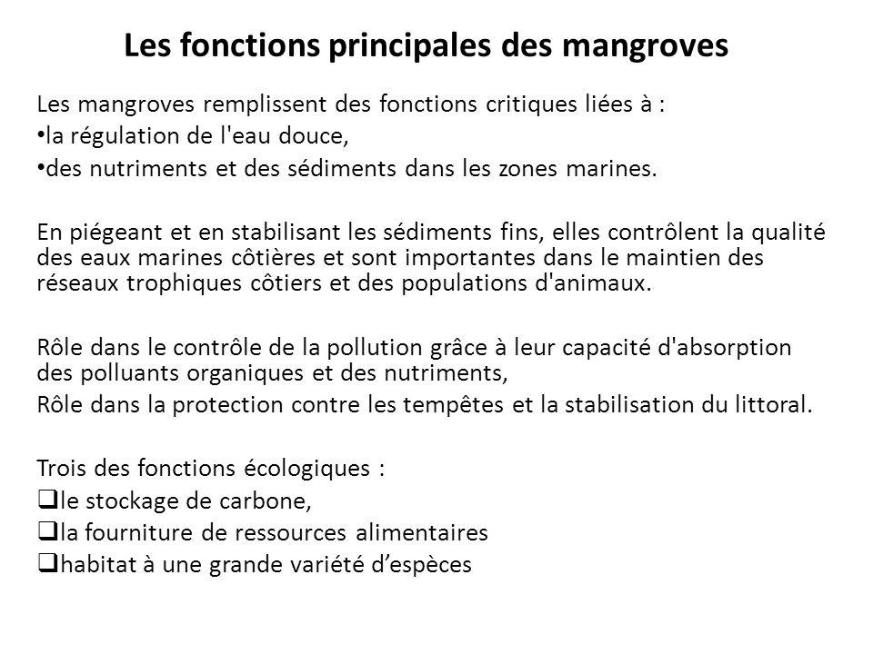 Les fonctions principales des mangroves