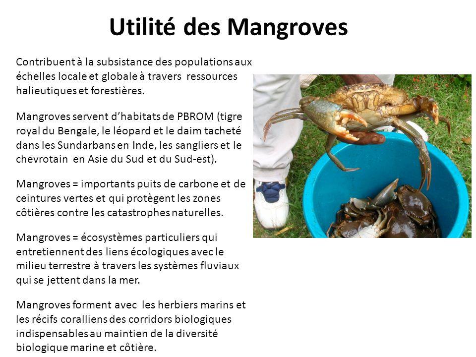 Utilité des Mangroves Contribuent à la subsistance des populations aux échelles locale et globale à travers ressources halieutiques et forestières.
