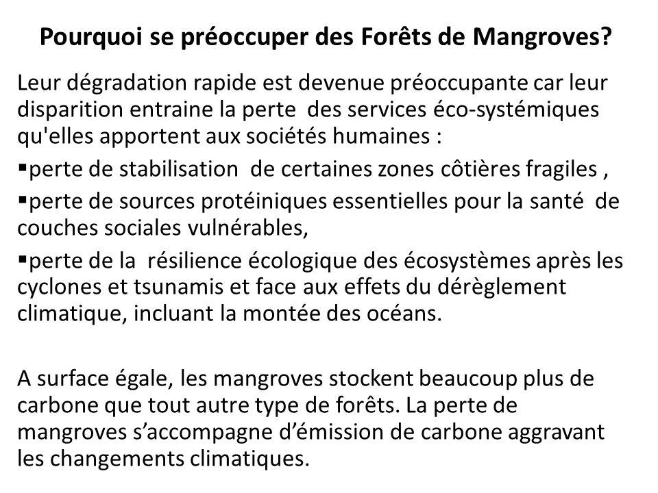Pourquoi se préoccuper des Forêts de Mangroves