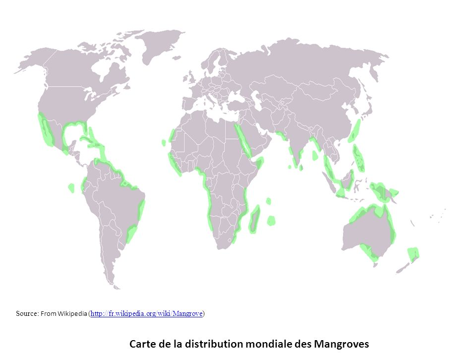 Carte de la distribution mondiale des Mangroves