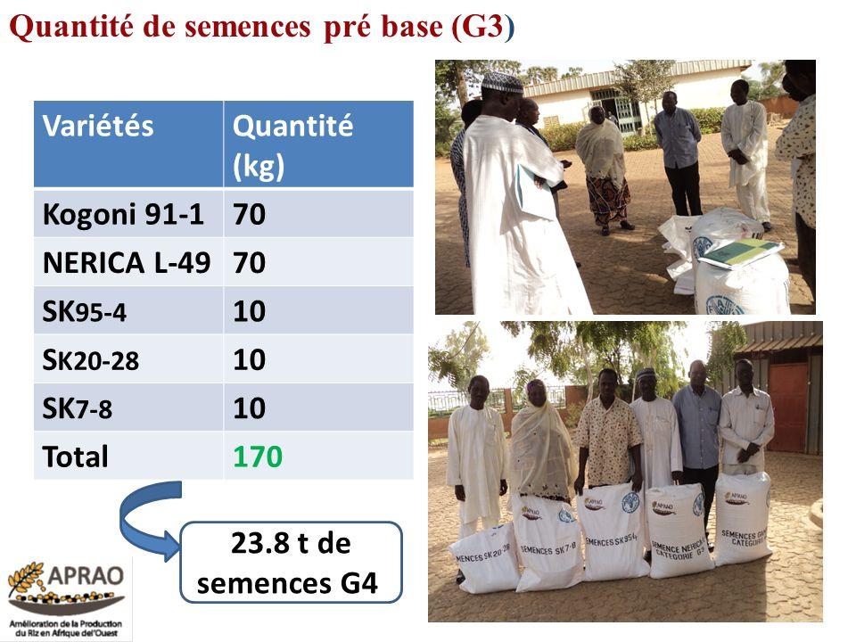 Quantité de semences pré base (G3)