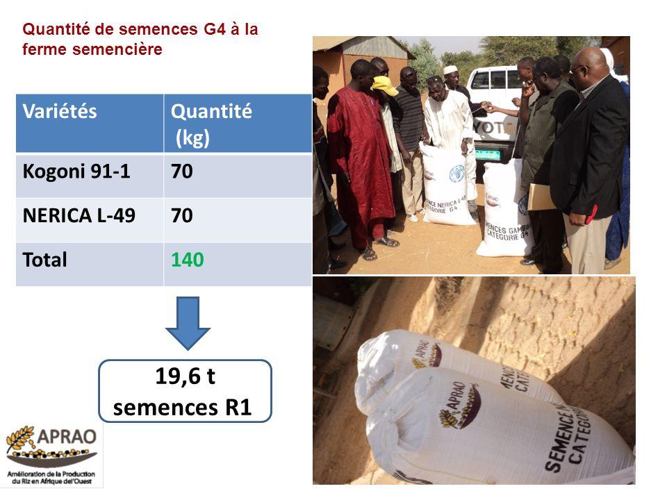 19,6 t semences R10 Variétés Quantité (kg) Kogoni 91-1 70 NERICA L-49