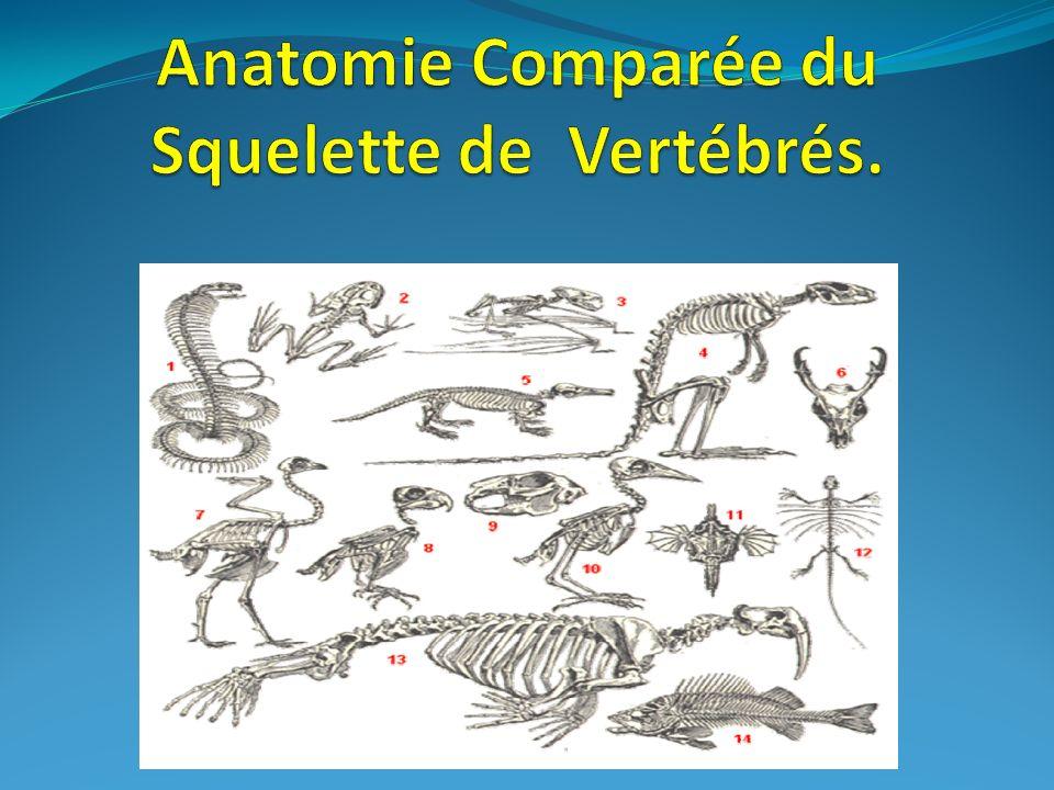 Anatomie Comparée du Squelette de Vertébrés.
