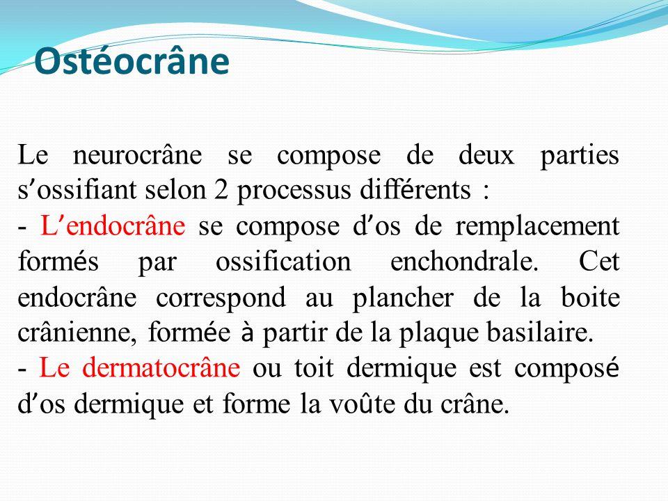 Ostéocrâne Le neurocrâne se compose de deux parties s'ossifiant selon 2 processus différents :